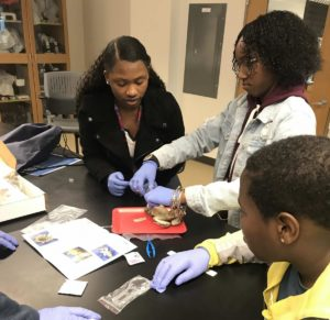 students dissecting a frog